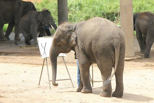 Elephant Artist See-Noon